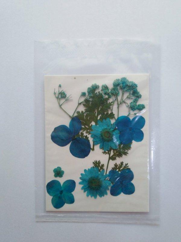 Pressed Dried Flowers
